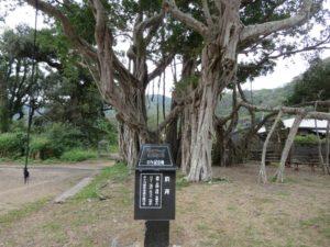 奄美大島の樹木