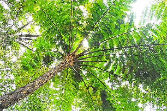 奄美の金作原原生林の絶景