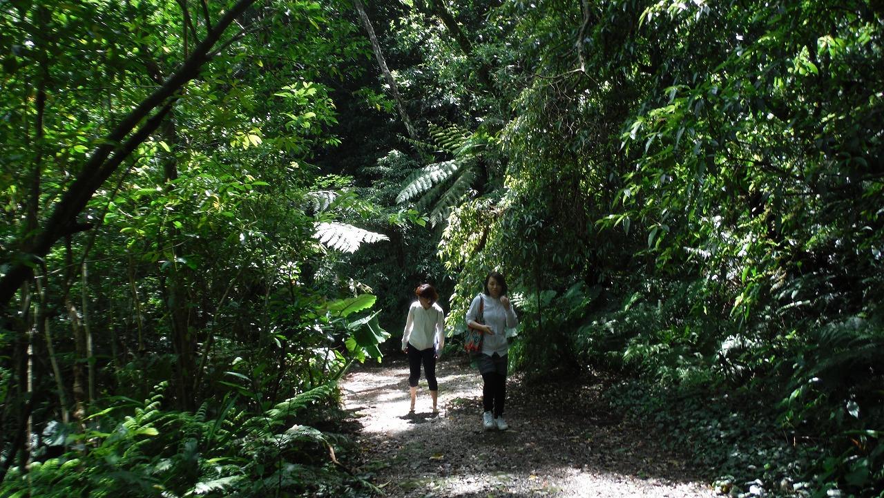 奄美のジャングル
