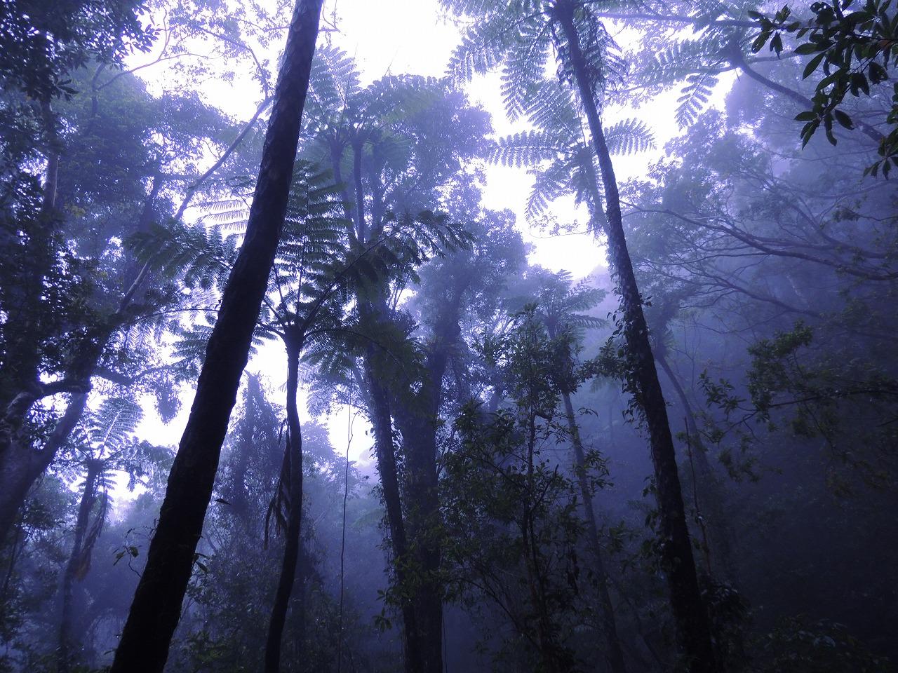幻想的な金作原原生林
