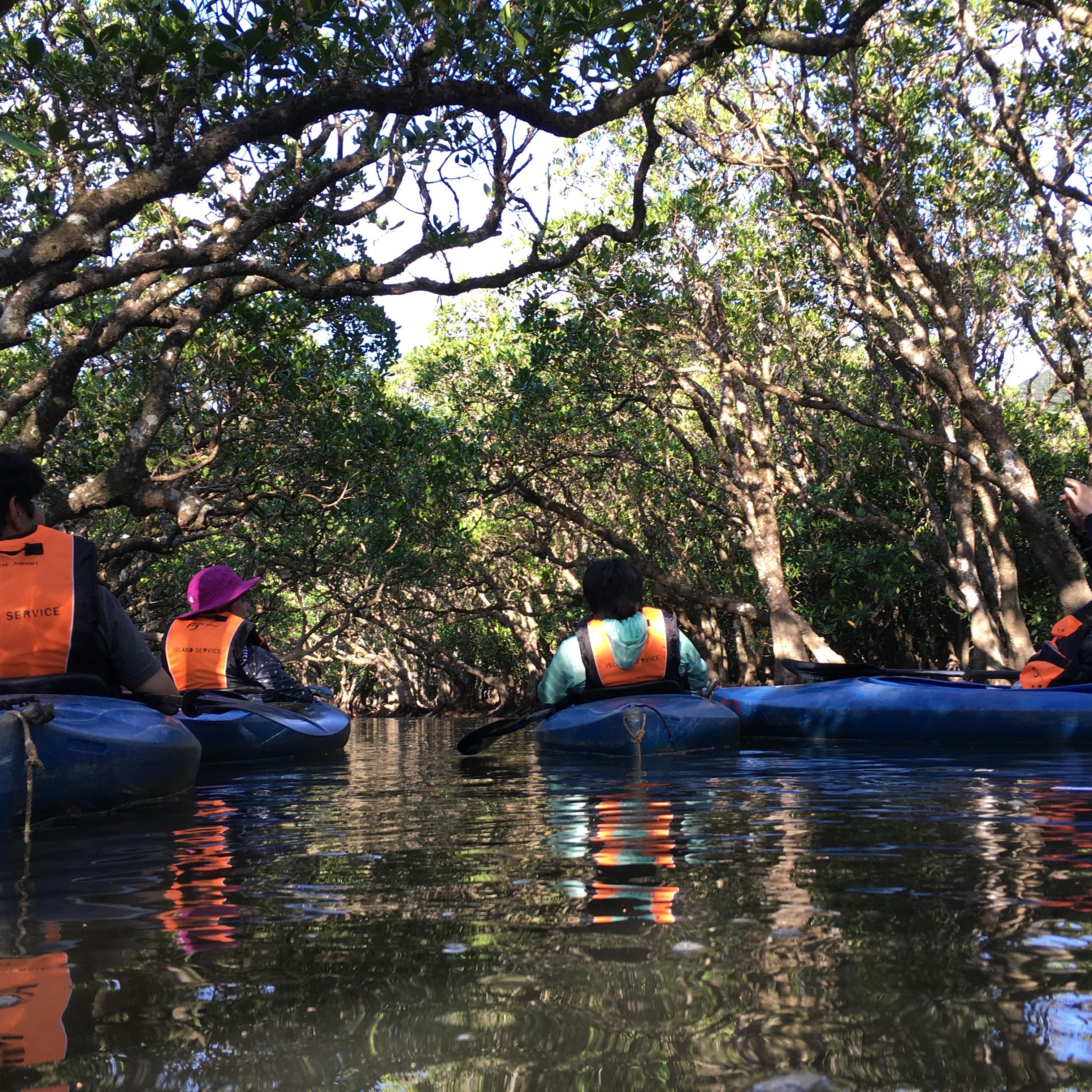 家族旅行でマングローブカヌー体験