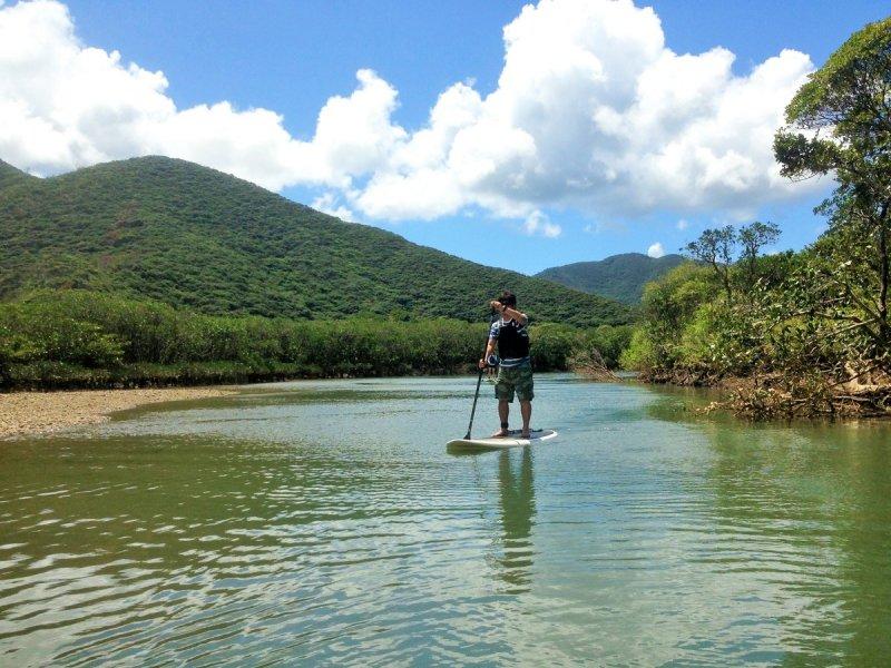 雄大なマングローブをのんびり冒険!マングローブSUPツアー(No.8)
