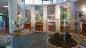 奄美大島の奄美野生生物保護センター