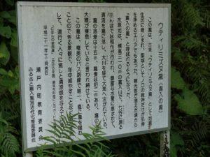 奄美大島の嘉入の滝