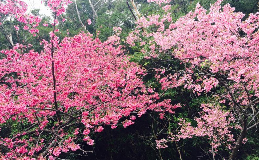 奄美大島の本茶峠