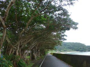 奄美大島の白浜海水浴場