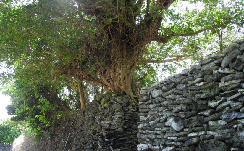 奄美大島のサンゴの石垣(与路島集落)