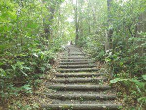 奄美大島の高知山展望台