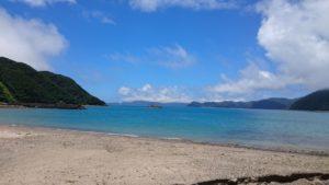 奄美大島の諸鈍長浜のデイゴ並木